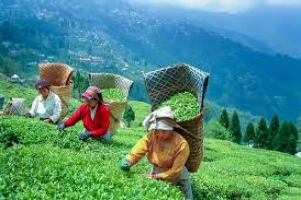 12 Greatest Places to Eat in Darjeeling! – A Entire Guide